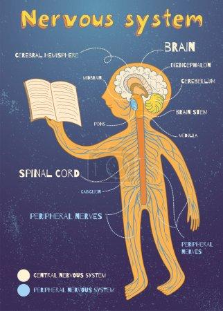 vector cartoon illustration of human nervous system for kids