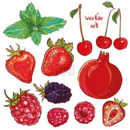 Illustration pour Ensemble vectoriel avec grenade, fraise, menthe, cerise, framboise, mûre. Illustration de petits fruits et baies. Frais, juteux et coloré. eps 10 - image libre de droit