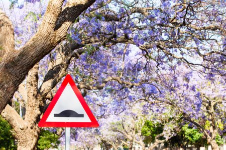 Triangular road sign warning of speed bump against purple jacara