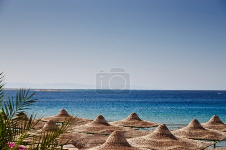 Beach, Red Sea, umbrellas, chaise lounges, branches of date palm