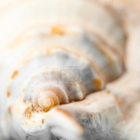 Natural spa elements - seashell with starshell