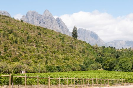 Hottentots-Holland Mountains towering above vineyards