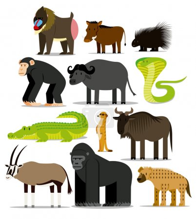 Set Of Different African Animals Isolated