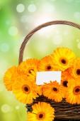 Gerber virágok a fonott