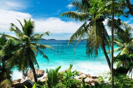 Palms on tropical beach on Seychelles