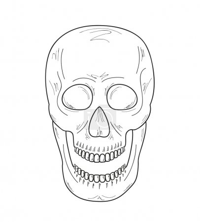 Illustration for Sketch of the skull with open mouth on white background, vector - Royalty Free Image
