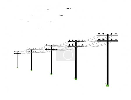 High voltage power lines and birds on white backgr...