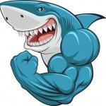 Vector illustration, toothy white shark...