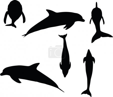 Illustration for Vector Image - dolphin silhouette isolated on white backgroun - Royalty Free Image