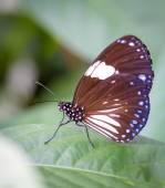 Krásný motýl butterfly Park