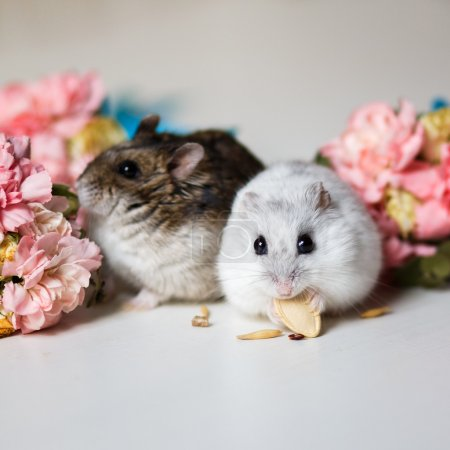Closeup photo of two little hamsters near flowers