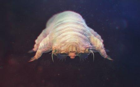 Photo pour Demodex Folliculorum gros plan. Démodicose - aussi appelée gale démodectique ou gale rouge. Demodex Vit dans les follicules pileux à la base des cils. Parasites cutanés humains - image libre de droit