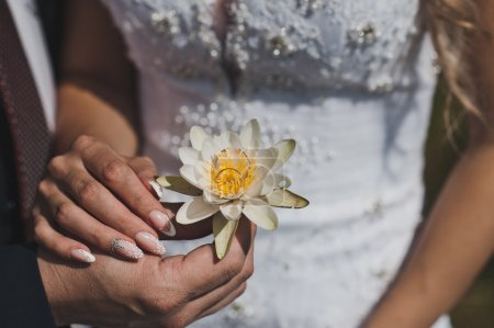 The white water Lily in the hands of the newlyweds 5241.