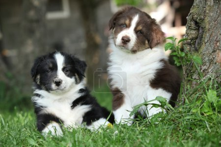 Two amazing puppies lying together in the grass