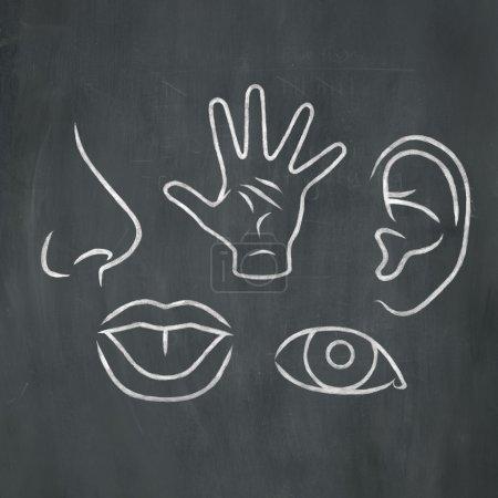 Chalk Five Senses