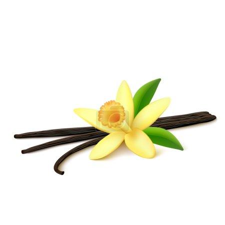 Illustration pour Haricots de vanille séchés, feuilles et fleurs de vanille avec des ombres isolées sur fond blanc. Illustration vectorielle . - image libre de droit