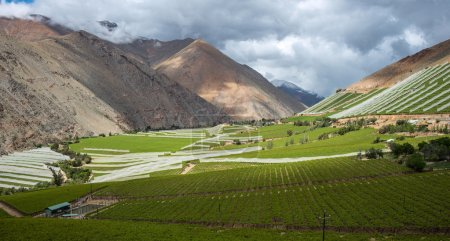 Photo pour Spring Vineyard. Vallée d'Elqui, Andes partie du désert d'Atacama dans la région de Coquimbo, Chili - image libre de droit