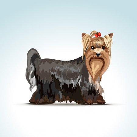 Vector Yorkshire Terrier Dog