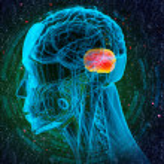 3d render medical illustration of the human brain ...