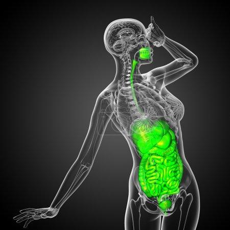 Photo pour 3d rendre illustration médicale du système digestif humain - vue de face - image libre de droit