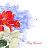 Watercolor background  with poinsettia flowers2-01