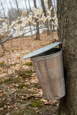 Pail used to collect sap of maple trees to produce maple syrup