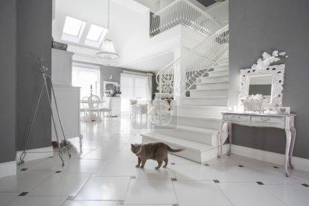 Photo pour Vue horizontale du chat à l'intérieur de luxe - image libre de droit