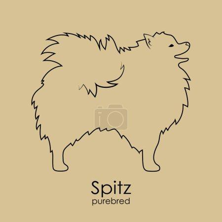 Dog breeds Spitz