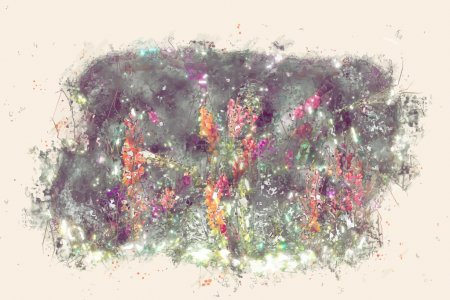 Beautiful colorful flowers of antirrhinum