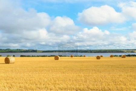 Photo pour Vue panoramique des cheminées de foin par temps ensoleillé (Île-du-Prince-Édouard, Canada) - image libre de droit