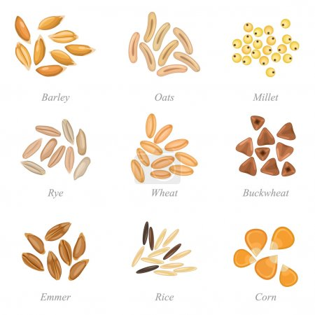 Icon set of cereal grains part 3