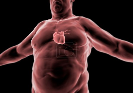 3d Human body, fat person, heart, anatomy
