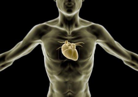 Photo pour 3D du corps humain, personne maigre, coeur et anatomie, radiographie - image libre de droit