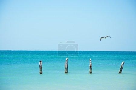 Higgs beach pier, bird, seagull, cormorant, wooden stakes, sea, Key West, Keys, Cayo Hueso, Monroe County, island, Florida