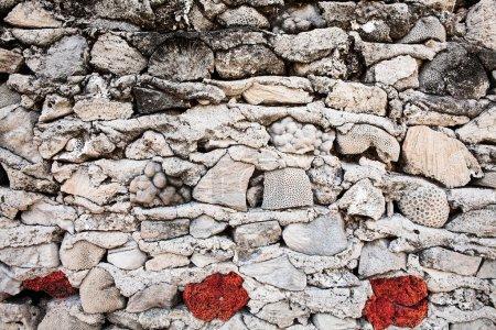 Foto de Fondo de muro de hormigón piedras agrietadas, vieja pared con elementos de conchas - Imagen libre de derechos