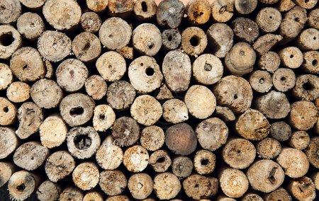 Background dry teak logs