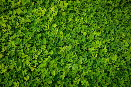 Photo for Fresh green leaves, natural background for design - Royalty Free Image