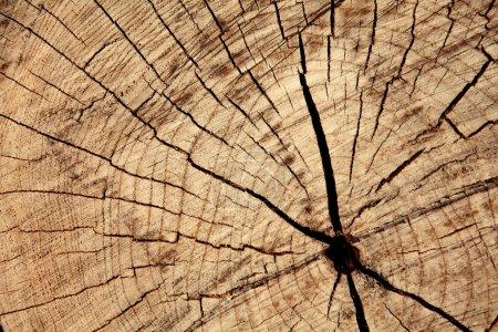 cracks on cut of dry trunk