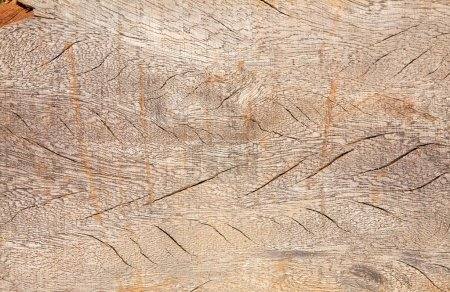 Photo for Brown wood texture. Abstract background, empty template - Royalty Free Image