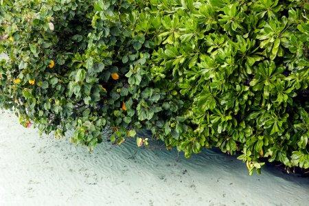 Photo pour Vert tropical frais leafs avec des gouttes de pluie - image libre de droit