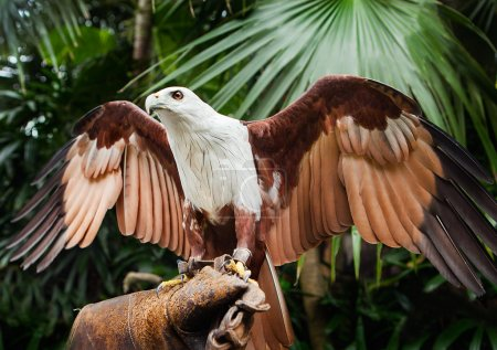 Falcon sitting on gloved hand of handler
