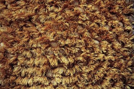 Texture de fond du tissu