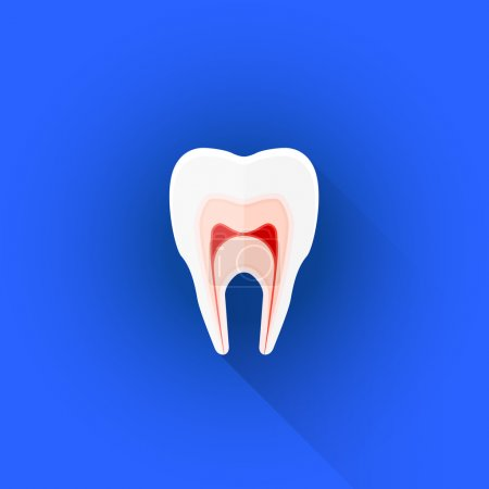 vector flat structure of tooth illustration ico