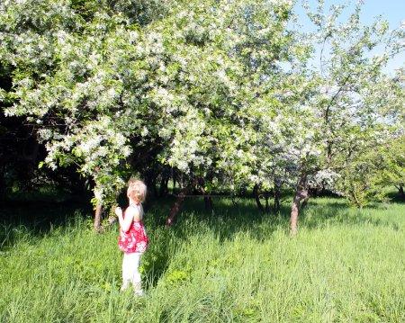Little girl on a summer meadow