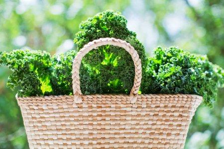 Photo pour Salade de chou frisé vert dans un sac écologique en paille à l'extérieur - image libre de droit
