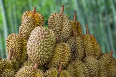Thailand 's fruit market in the ancient city of Chiang Mai --- Durian