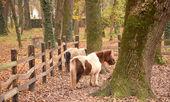 Pony at the farm