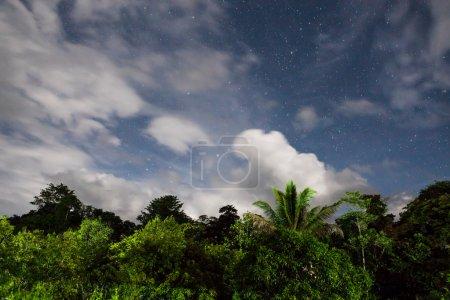 cime des arbres de la forêt tropicale et ciel étoilé