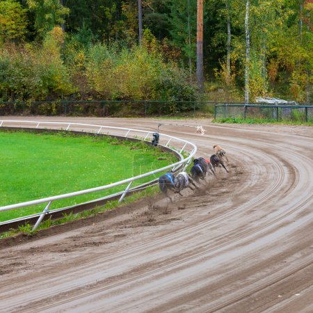 chiens de Greyhound racing