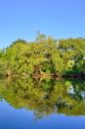 Green trees and bushes grow on the lake